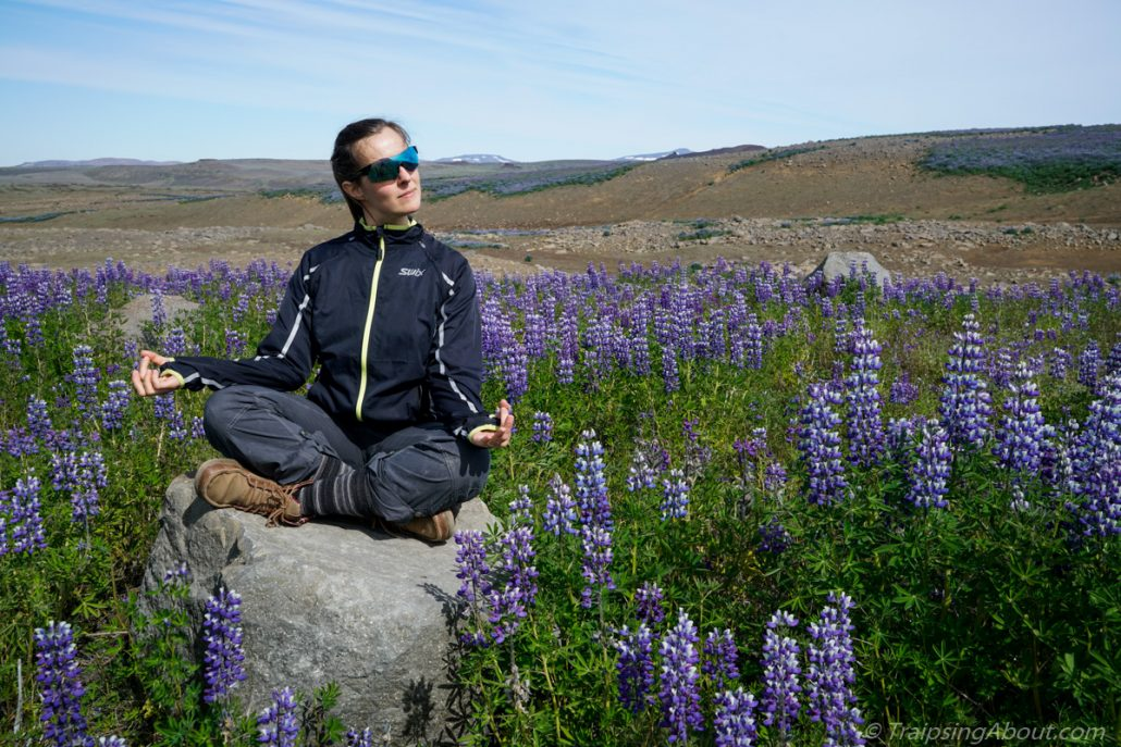 No, of COURSE this photo isn't staged. We always meditate in a sea of lupin...